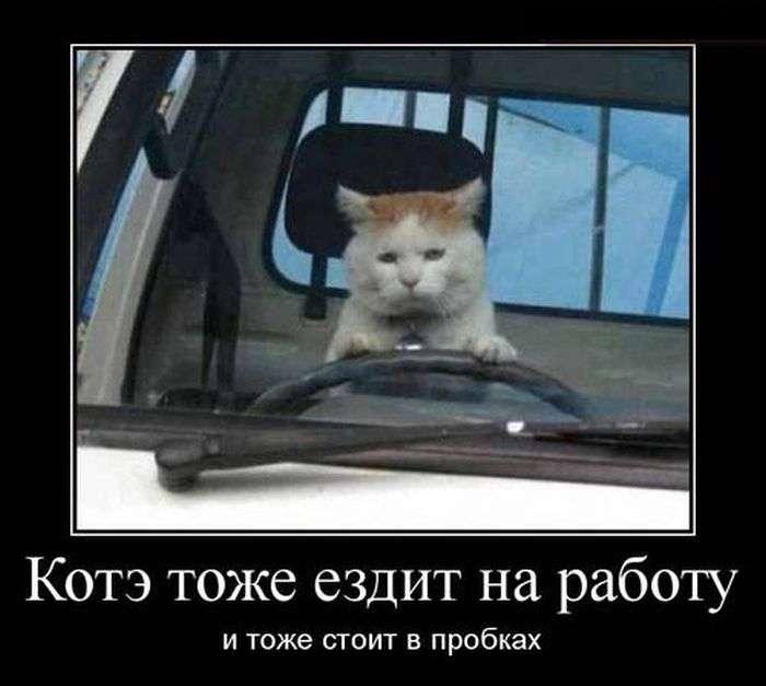Демотиваторы на 12.04.2016г (30 фото)