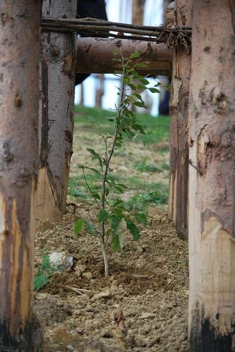 Храм в Италии из живых деревьев (18 фото)