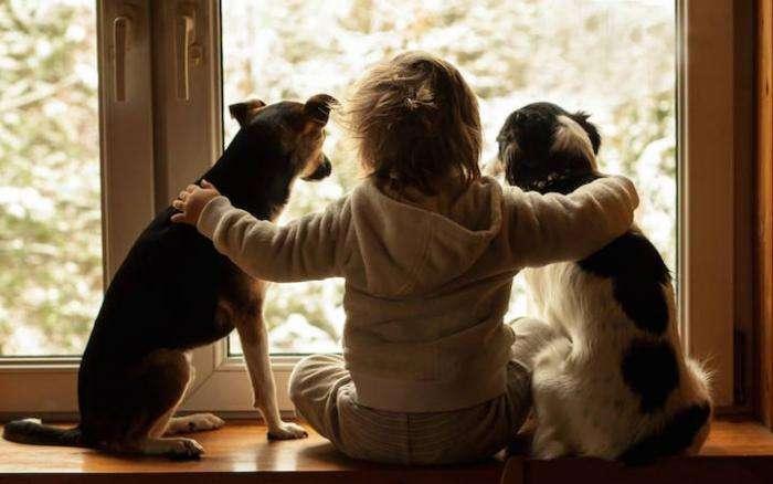 Трогательная дружба мальчика и трех собак (10 фото)