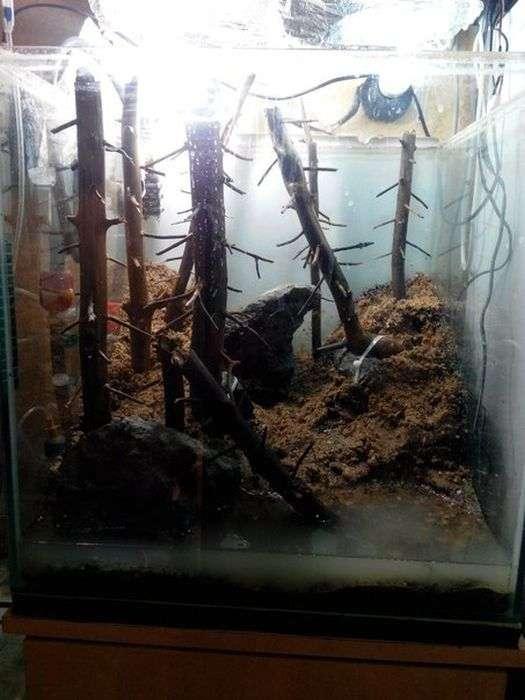Акваскейп «Сосновый бор» своими руками (8 фото)