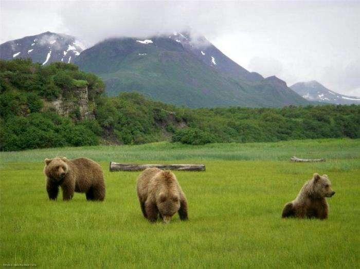 «Медвежий лагерь» на Аляске (10 фото)