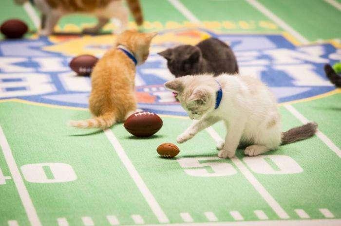 Футбольный чемпионат для котят (12 фото)