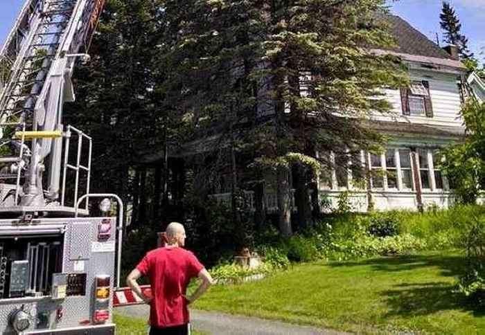Бабуля вскарабкалась на 23-метровое дерево за любимой кошкой (3 фото)