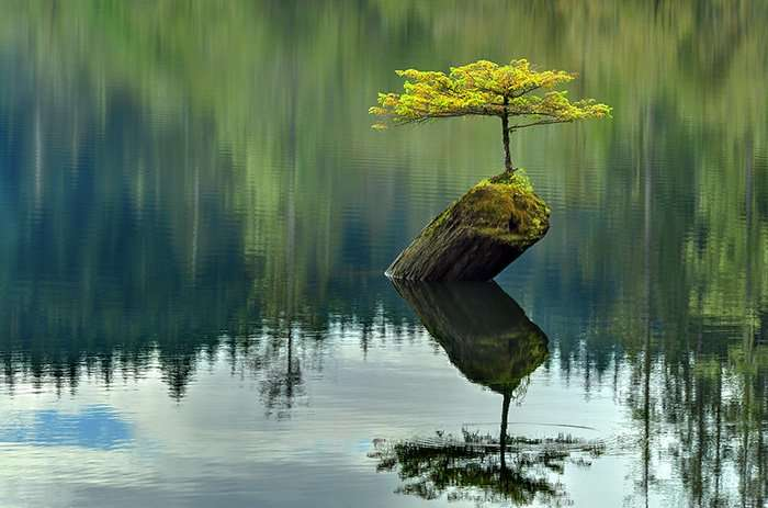15 невероятно красивых мини-деревьев, созданных людьми (15 фото)