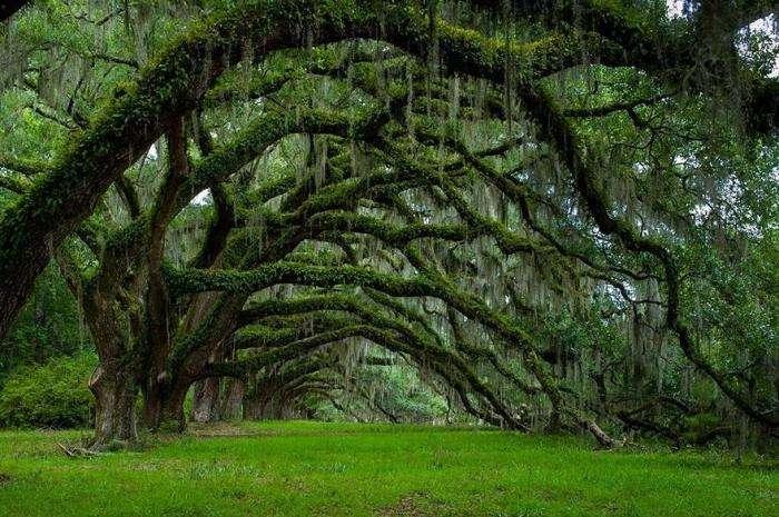 Необычные деревья со всего мира (22 фото)