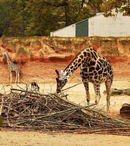 Зоопарк Ганновера (22 фото)