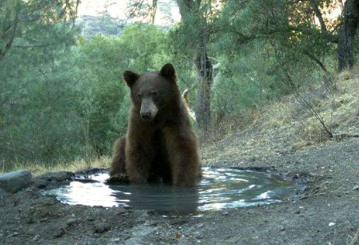 Медведь тот еще негодяй (3 фото)
