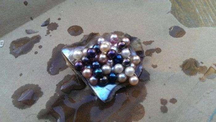 Подарил девушке заготовку жемчужного ожерелья (6 фото)