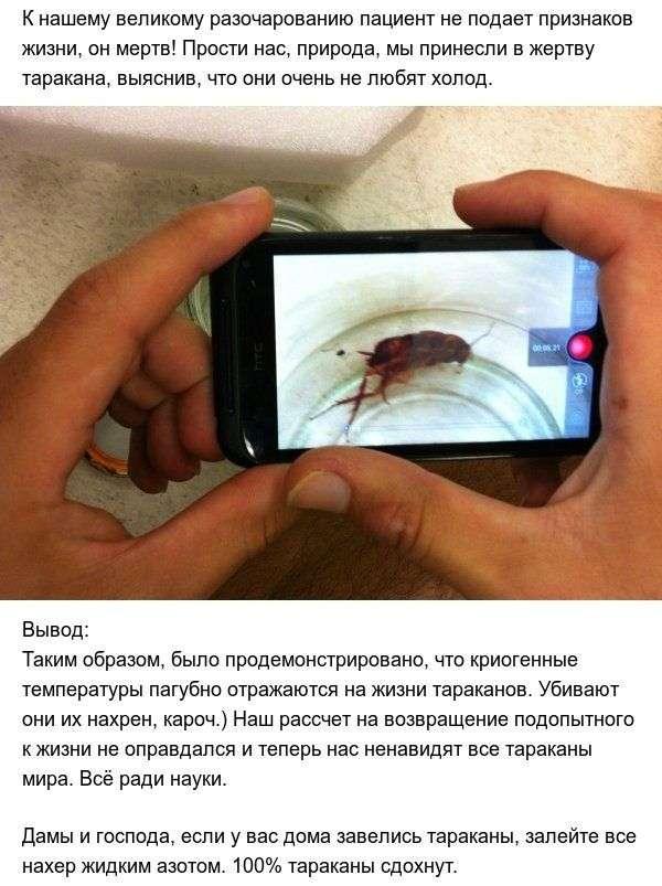 Эксперимент: тараканы при экстремально низких температурах