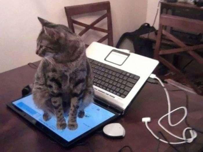 15 котов, которые плевать хотели на вашу логику