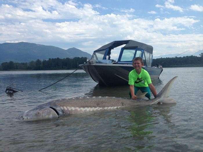 9-летний пацан поймал осетра весом 272 кг