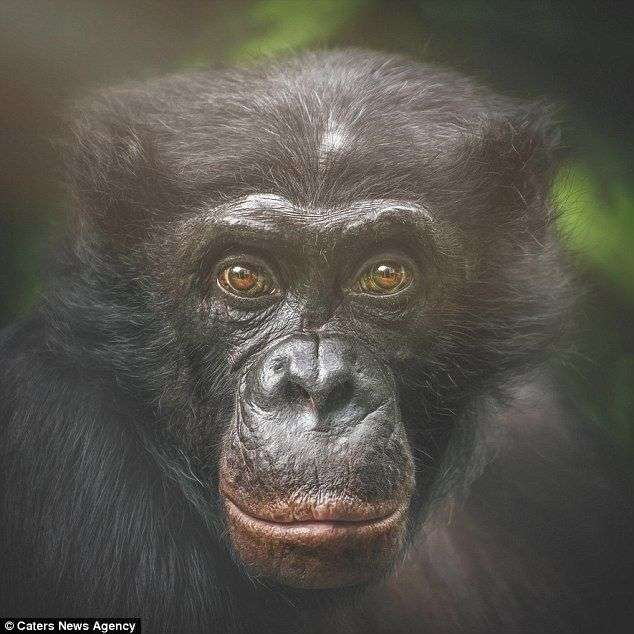 Человек и приматы: как мы поразительно похожи