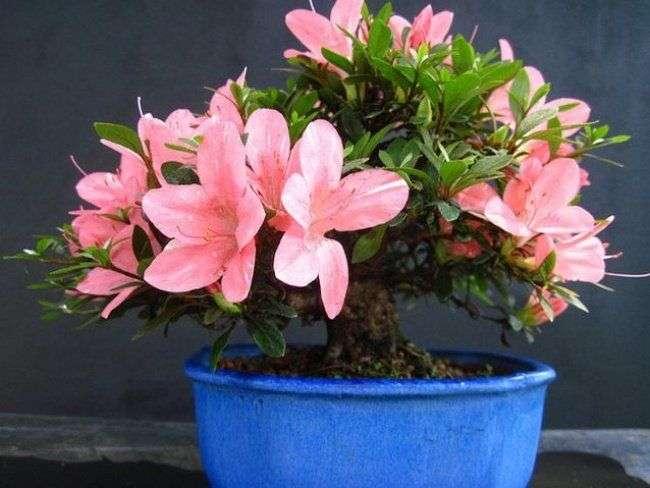Идеальные растения для каждой комнаты, которые очистят воздух в вашей квартире
