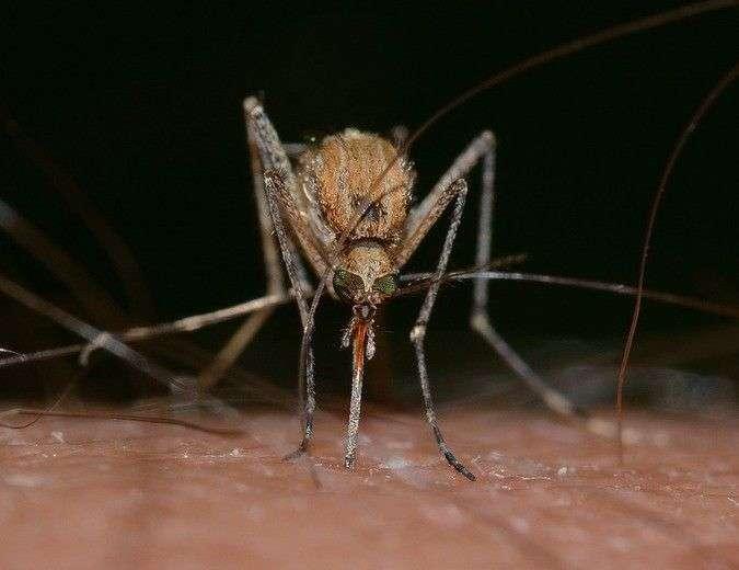 Вирус Зика появился после опытов 2012 года