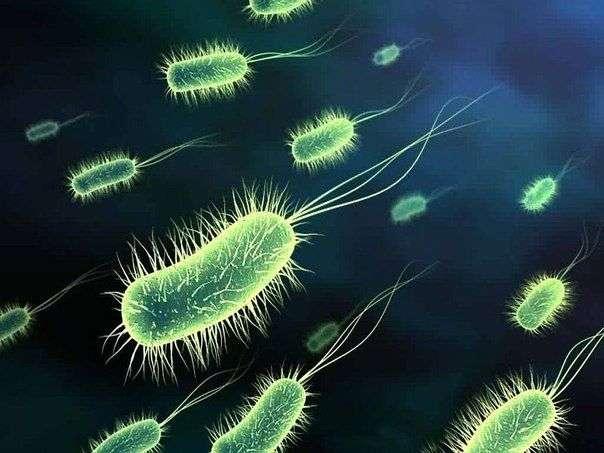 Плотоядные бактерии заживо съели подростка в течении двух дней
