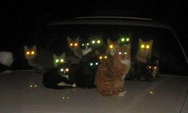 Почему глаза животных светятся в темноте, а глаза человека выглядят красными на фото