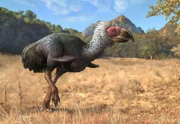 Титанис — вымершая хищная птица, которая питалась бизонами