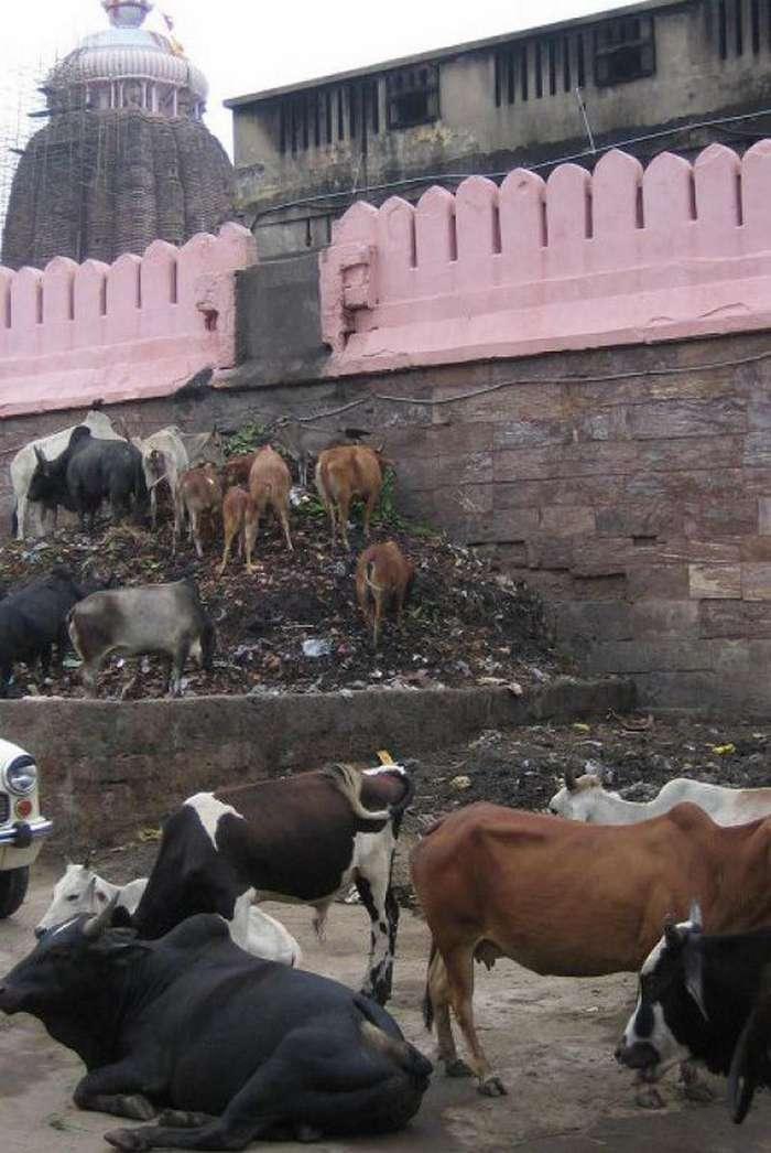 Такое увидишь только в Индии