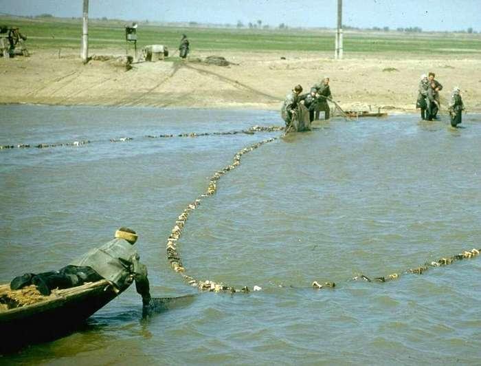 Добыча черной икры в 1960 году