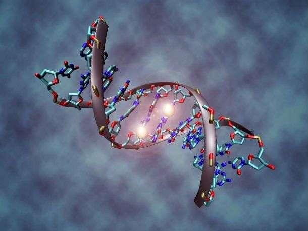 Интересные факты про ДНК, которые вы могли не знать