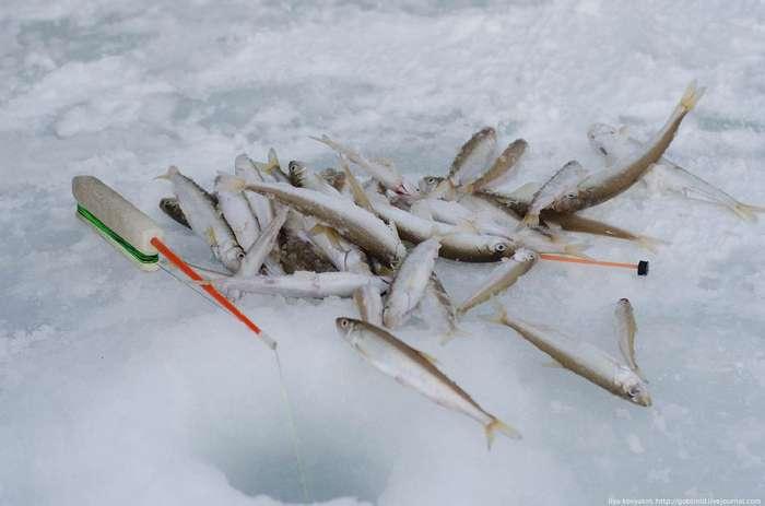 Как рыбачат на Колыме