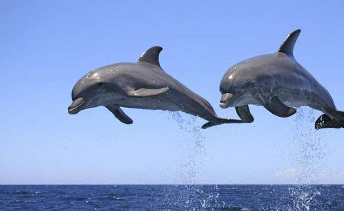 Смертельная тайна дельфинов
