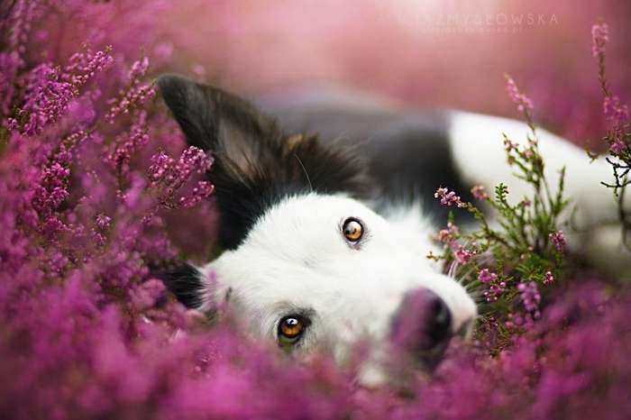 Таких крутых портретов собак еще никто не делал