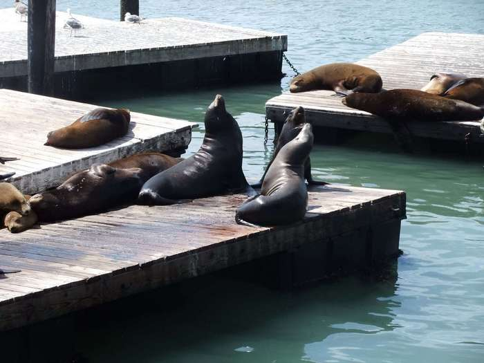 10 мест для отдыха в обществе диких животных