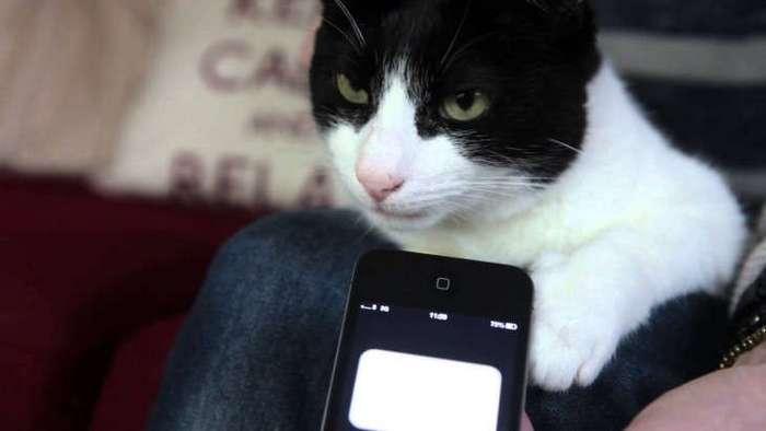 10 увлекательных фактов о кошачьей стратегии выживания в человеческих городах