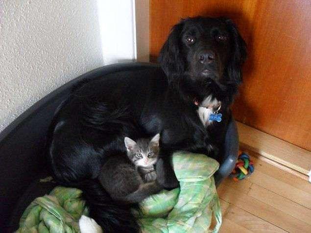 Без кота – жизнь не та: 27 умильных фото