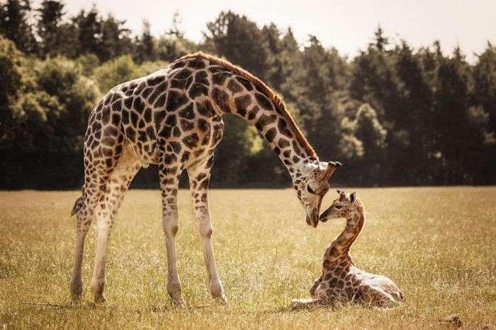 Большие и маленькие животные вместе;) Удивительно тёплые фотографии