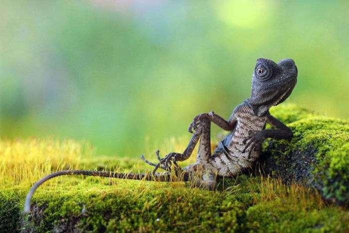 20 грандиозных фото животных
