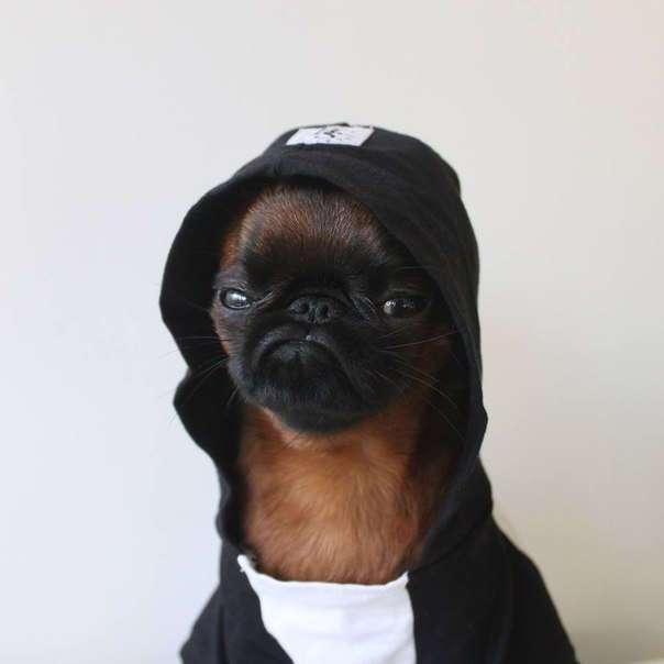 Пес, который