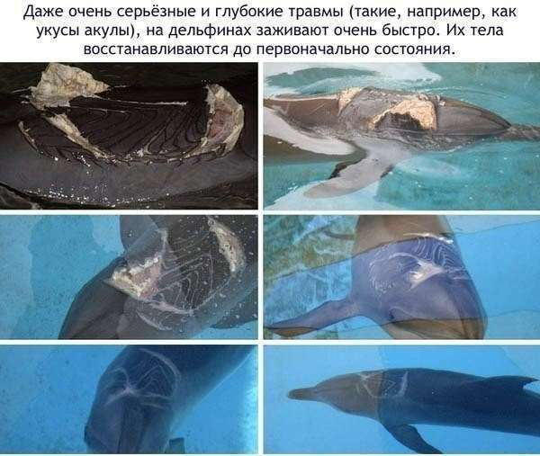 Интересное о дельфинах