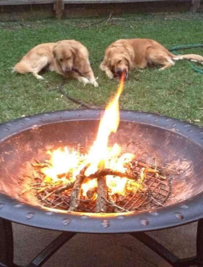 25 собак, которые прославились случайному фото