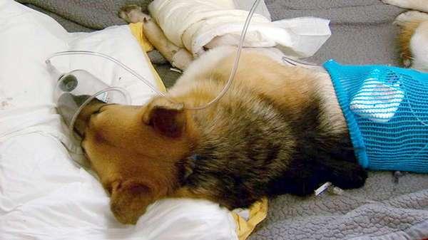 Собака спасла жизнь маленькой девочки