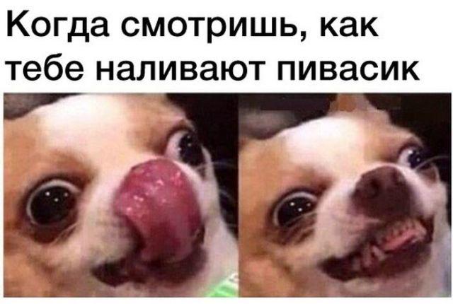 ВСЯКИ ПСЯКИ