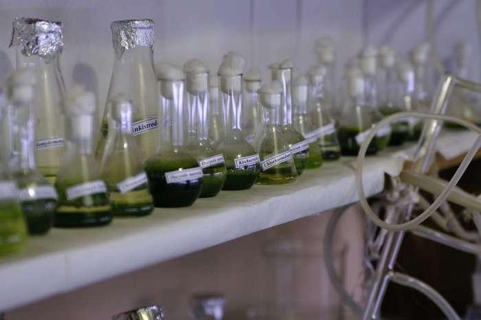 Российским учёным удалось синтезировать недорогое лекарство от рака