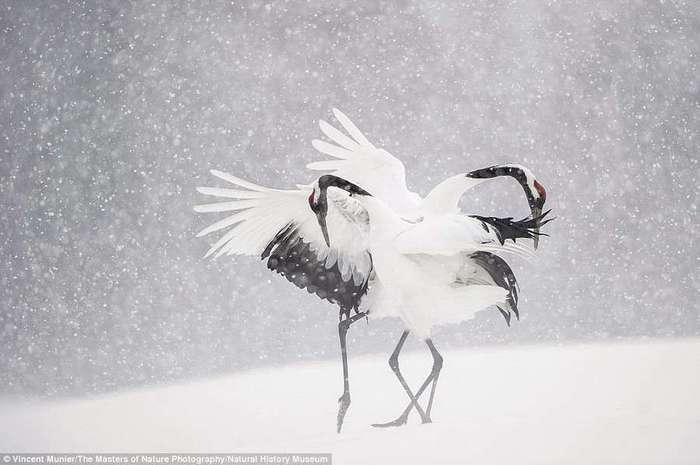 Удивительные снимки от фотографов дикой природы