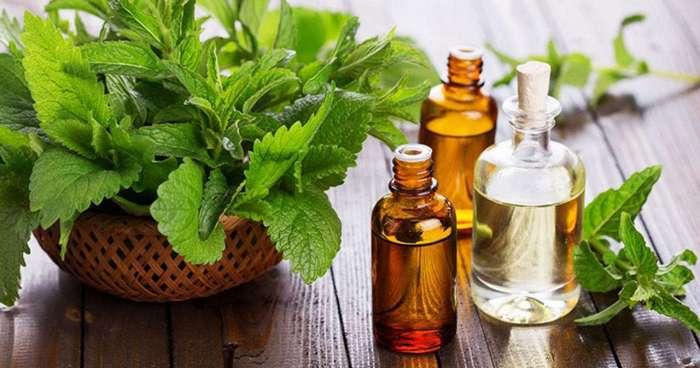 Как запахи влияют на концентрацию и память