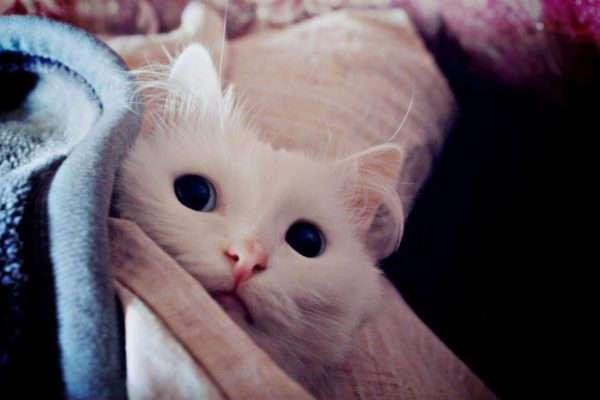 10 мифов о бездомных животных