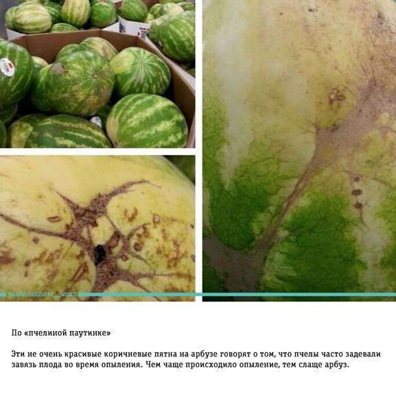Как правильно выбирать арбуз: трюки от фермера