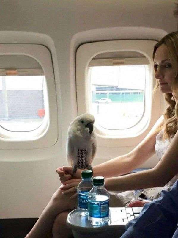 Самые жуткие попутчики в самолете, каких только можно себе представить