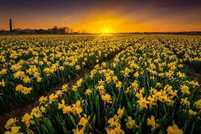 40 восхитительных причин посетить Нидерланды
