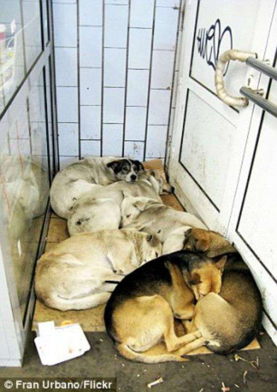 Как бездомные собаки ориентируются в московском метро