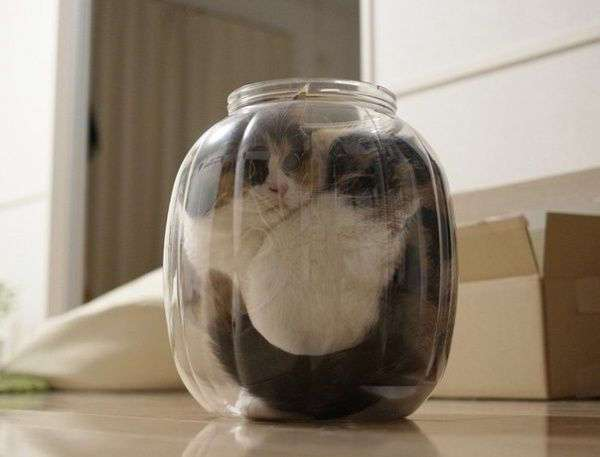 Логика у котов не похожа ни на чью другую