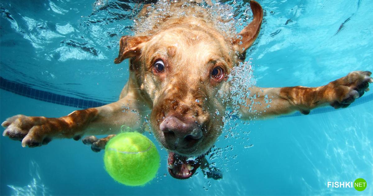 5 фактов о собаках