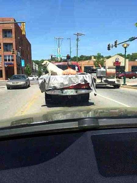 Чудики за рулем