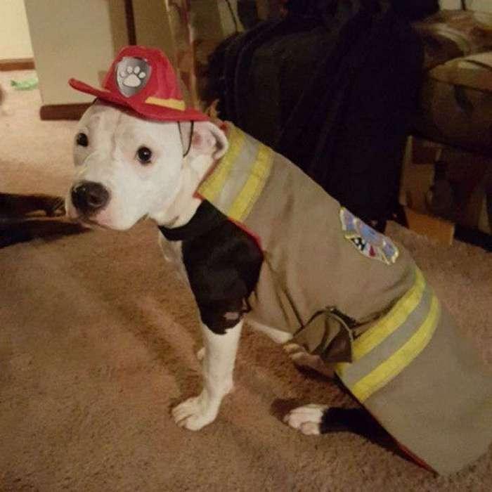 Щенок, едва выживший после пожара, вырос и стал пожарной собакой