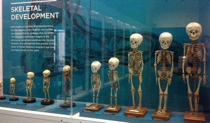 9 самых жутких музеев мира